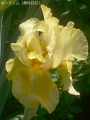 2017年の春の花5
