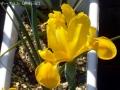 2017年の春の花7