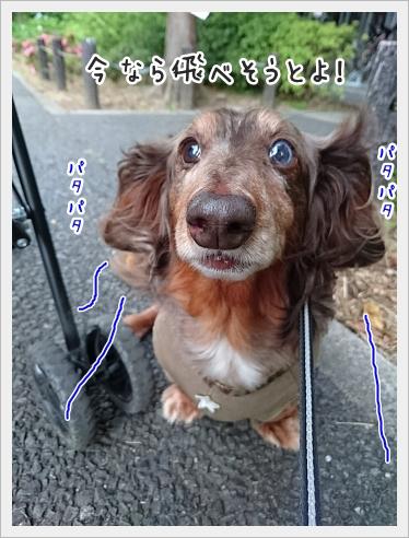 fc2_2017-05-29_02.jpg