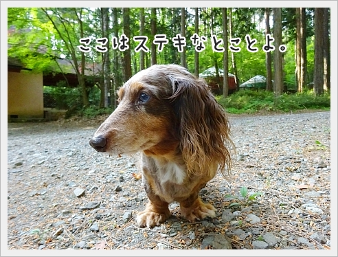 fc2_2017-06-14_01.jpg