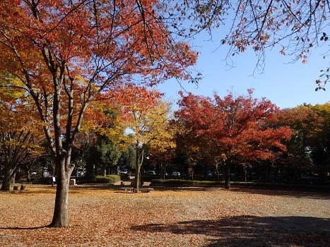 「城山公園(桶川)散歩から(2)」