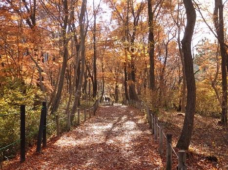 「嵐山渓谷の紅葉」