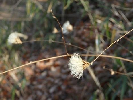「北本自然観察公園 1月21日(2)」
