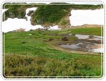 ライチョウ立山 (53)