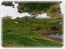ライチョウ立山 (54)