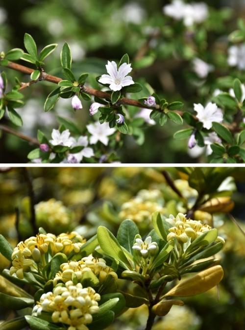 ⑦境内の花