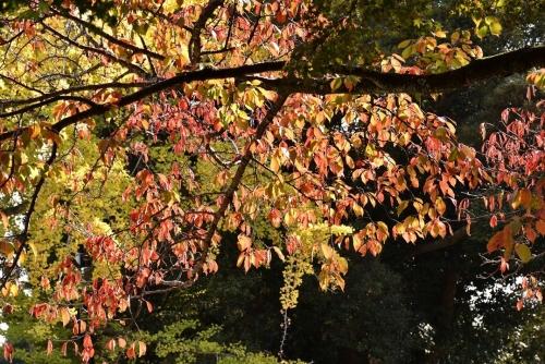 奈良紅葉1