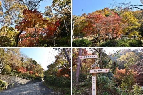 枚岡公園紅葉