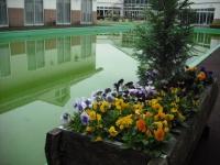 花と泉の公園2017-05-14ベゴニア館002