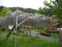 花と泉の公園2017-05-14牡丹園003