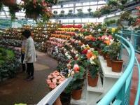 花と泉の公園2017-05-14ベゴニア館023