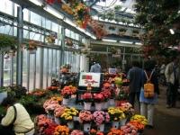 花と泉の公園2017-05-14ベゴニア館022