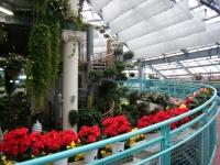 花と泉の公園2017-05-14ベゴニア館028