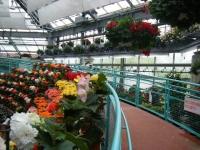 花と泉の公園2017-05-14ベゴニア館027