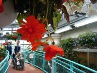 花と泉の公園2017-05-14ベゴニア館026