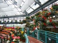 花と泉の公園2017-05-14ベゴニア館025