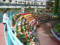 花と泉の公園2017-05-14ベゴニア館036