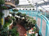 花と泉の公園2017-05-14ベゴニア館034