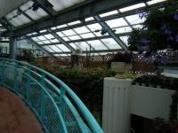 花と泉の公園2017-05-14ベゴニア館035
