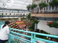 花と泉の公園2017-05-14ベゴニア館041