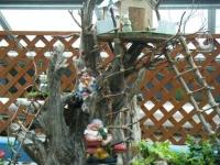 花と泉の公園2017-05-14ベゴニア館040