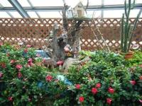 花と泉の公園2017-05-14ベゴニア館039