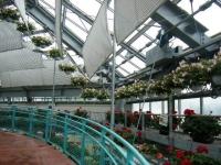 花と泉の公園2017-05-14ベゴニア館045