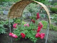花と泉の公園2017-05-14牡丹園044