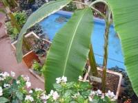 花と泉の公園2017-05-14ベゴニア館056