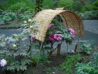 花と泉の公園2017-05-14牡丹園071