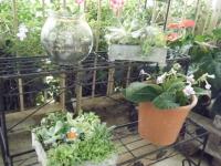 花と泉の公園2017-05-14ベゴニア館084