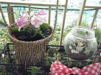 花と泉の公園2017-05-14ベゴニア館083