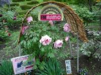 花と泉の公園2017-05-14牡丹園078