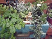 花と泉の公園2017-05-14ベゴニア館090
