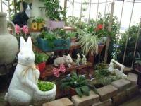 花と泉の公園2017-05-14ベゴニア館087