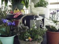 花と泉の公園2017-05-14ベゴニア館095