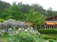 花と泉の公園2017-05-14牡丹園088