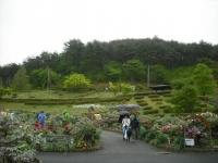 花と泉の公園2017-05-14牡丹園095