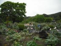 花と泉の公園2017-05-14牡丹園094