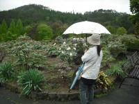 花と泉の公園2017-05-14牡丹園091