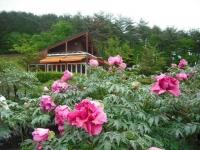 花と泉の公園2017-05-14牡丹園092