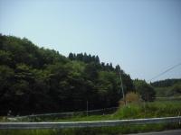 2017-05-23しろぷーうさぎ04
