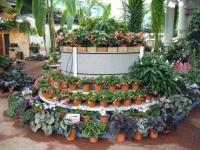 花と泉の公園2017-05-14ベゴニア館114