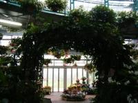花と泉の公園2017-05-14ベゴニア館112