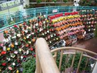 花と泉の公園2017-05-14ベゴニア館109