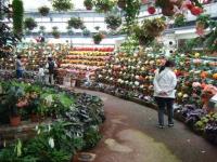 花と泉の公園2017-05-14ベゴニア館119