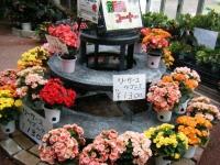 花と泉の公園2017-05-14ベゴニア館118