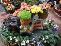 花と泉の公園2017-05-14ベゴニア館117