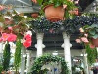 花と泉の公園2017-05-14ベゴニア館116