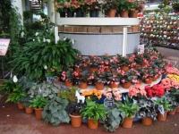 花と泉の公園2017-05-14ベゴニア館115